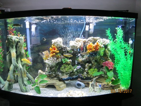 46 BOW FRONT 16 CICHLIDS
