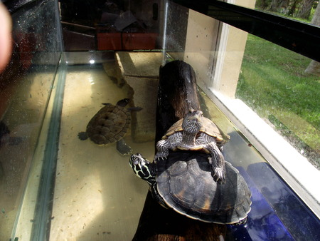 Cool Turtle Tank Ideas for Pinterest
