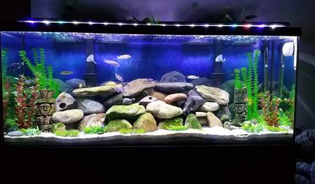 New Leds for my 55 gallon mbuna tank :)