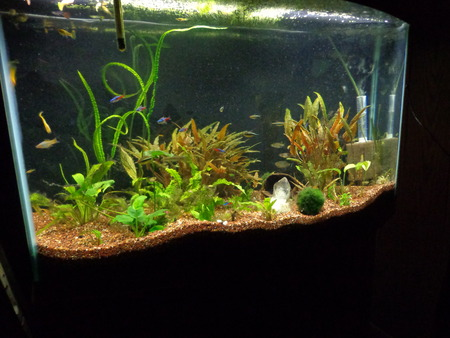 Download image Nice Fish Tank PC, Android, iPhone and iPad. Wallpapers ...