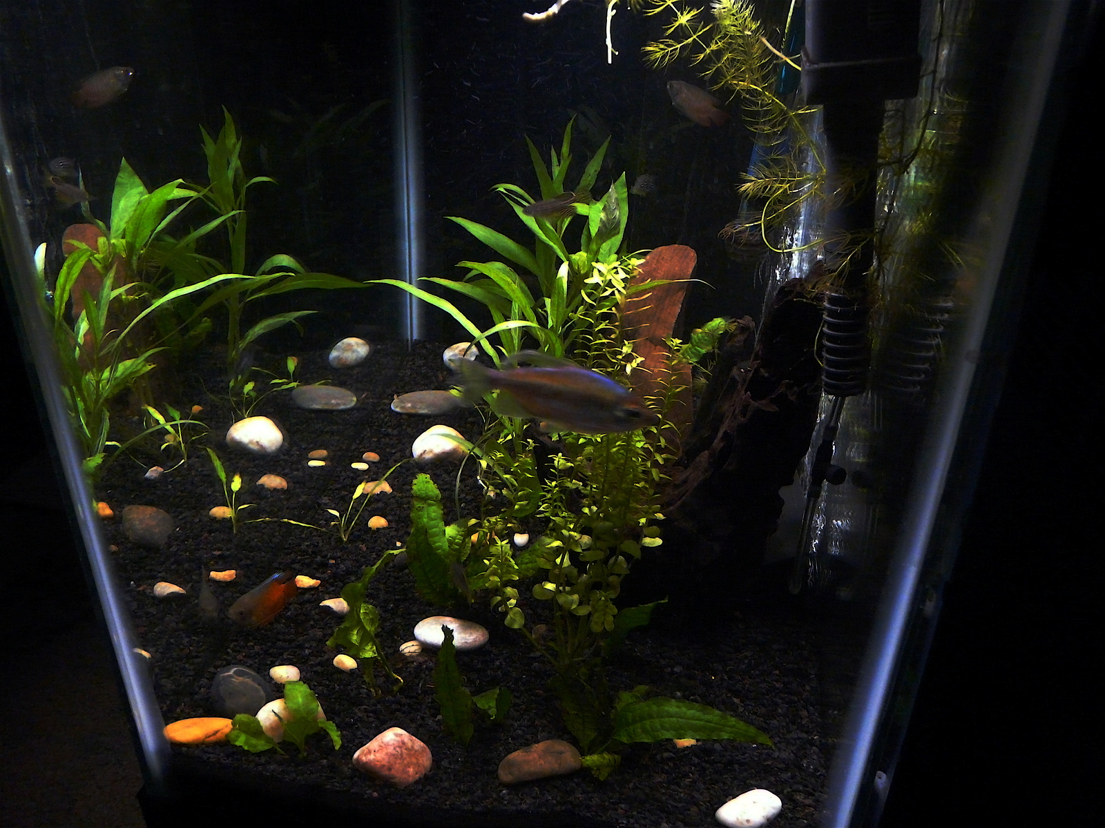 20g Planted Tank side view | by Joey Solomon