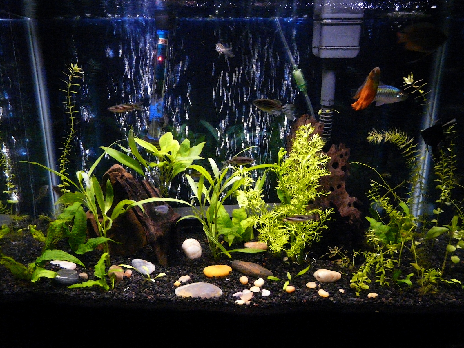 20g Planted Tank | by Joey Solomon