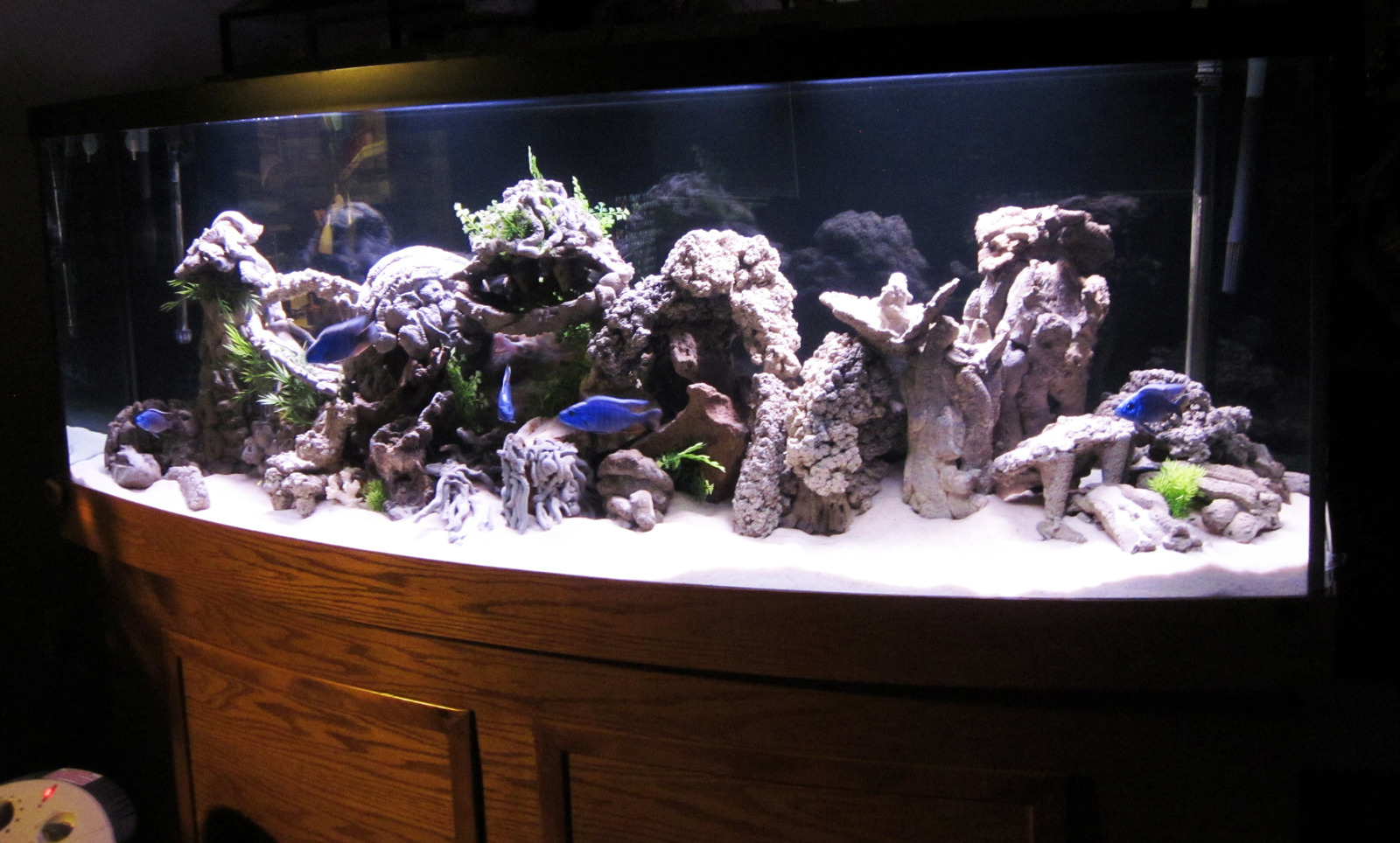 155 gallon bowfront african cichlid | by Charlie B
