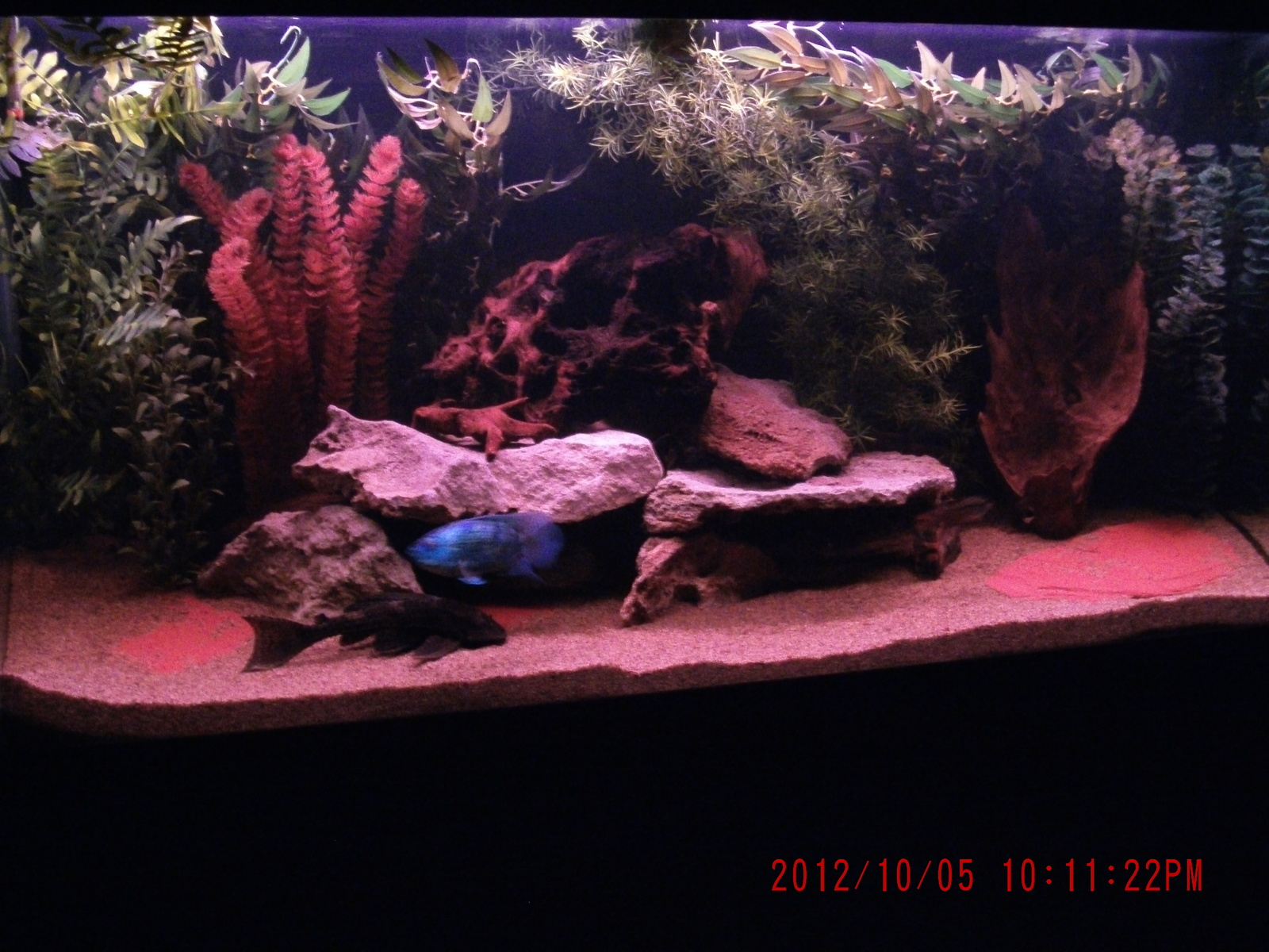 Update on 90 gallon set up has black background now and I redecorated it.  | by J B