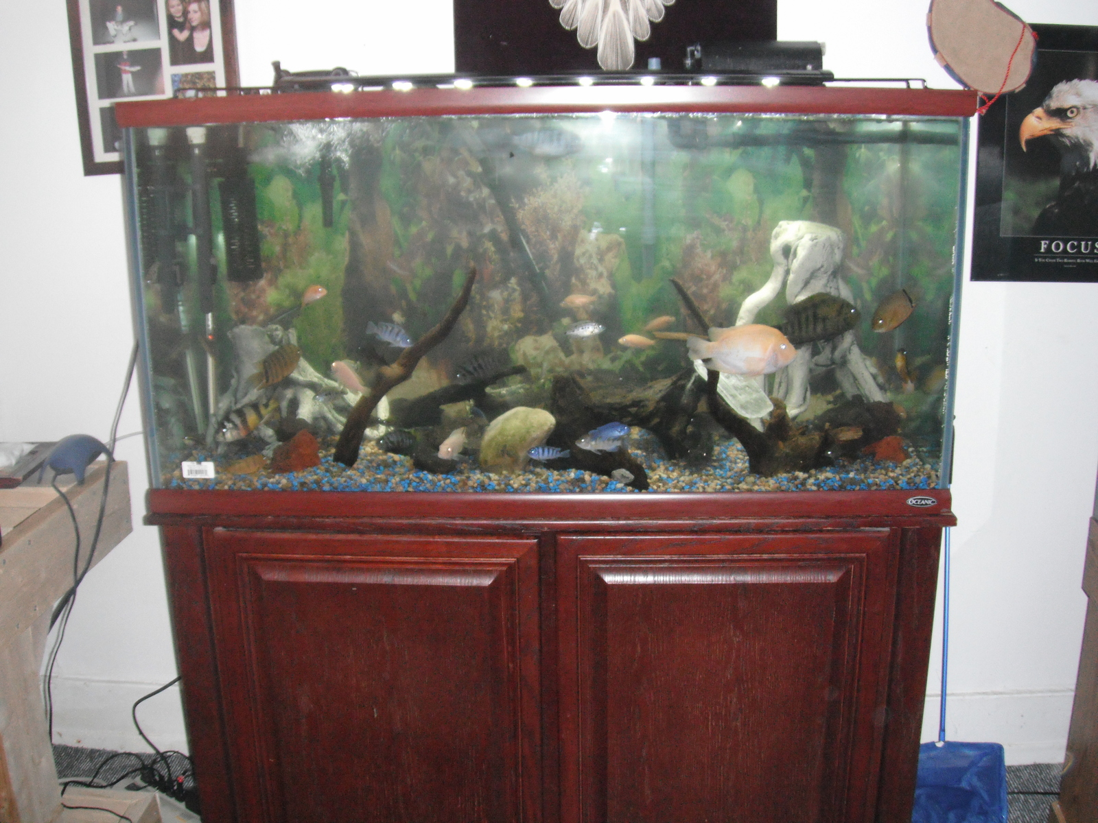 knew 90 gallon cichlid tank