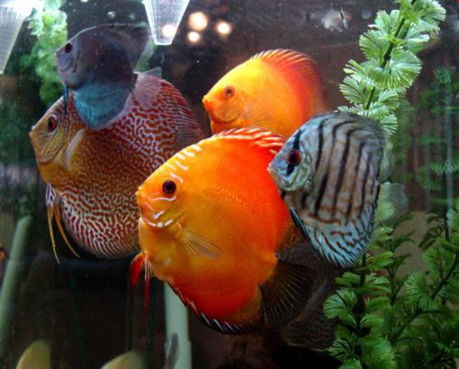 A Colorful Collection of Discus