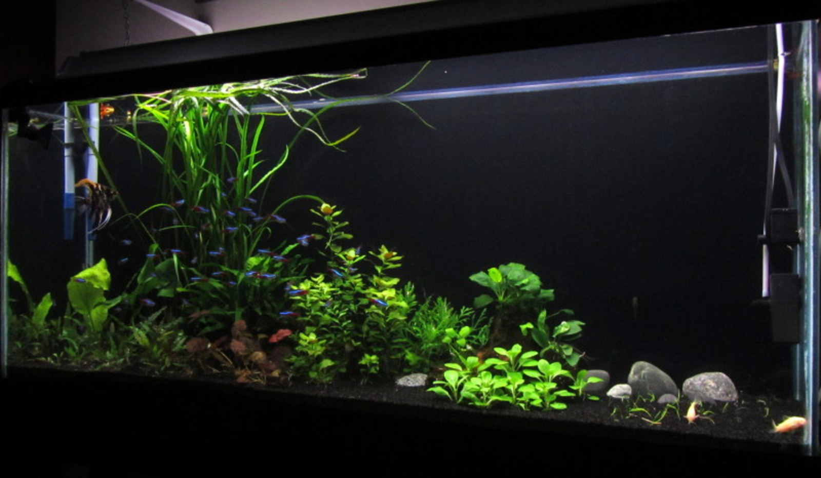 NOT MY TANK. Want to start a planted New World.  Guidance plz.  That means you Mr. Noon.  And of course others | by George Hraha