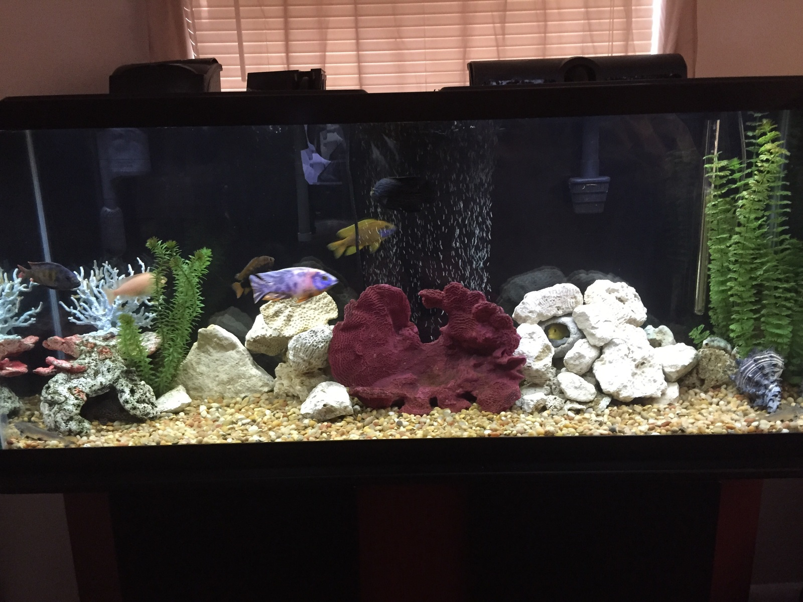 My Dad's tank | by Sammy Ramos