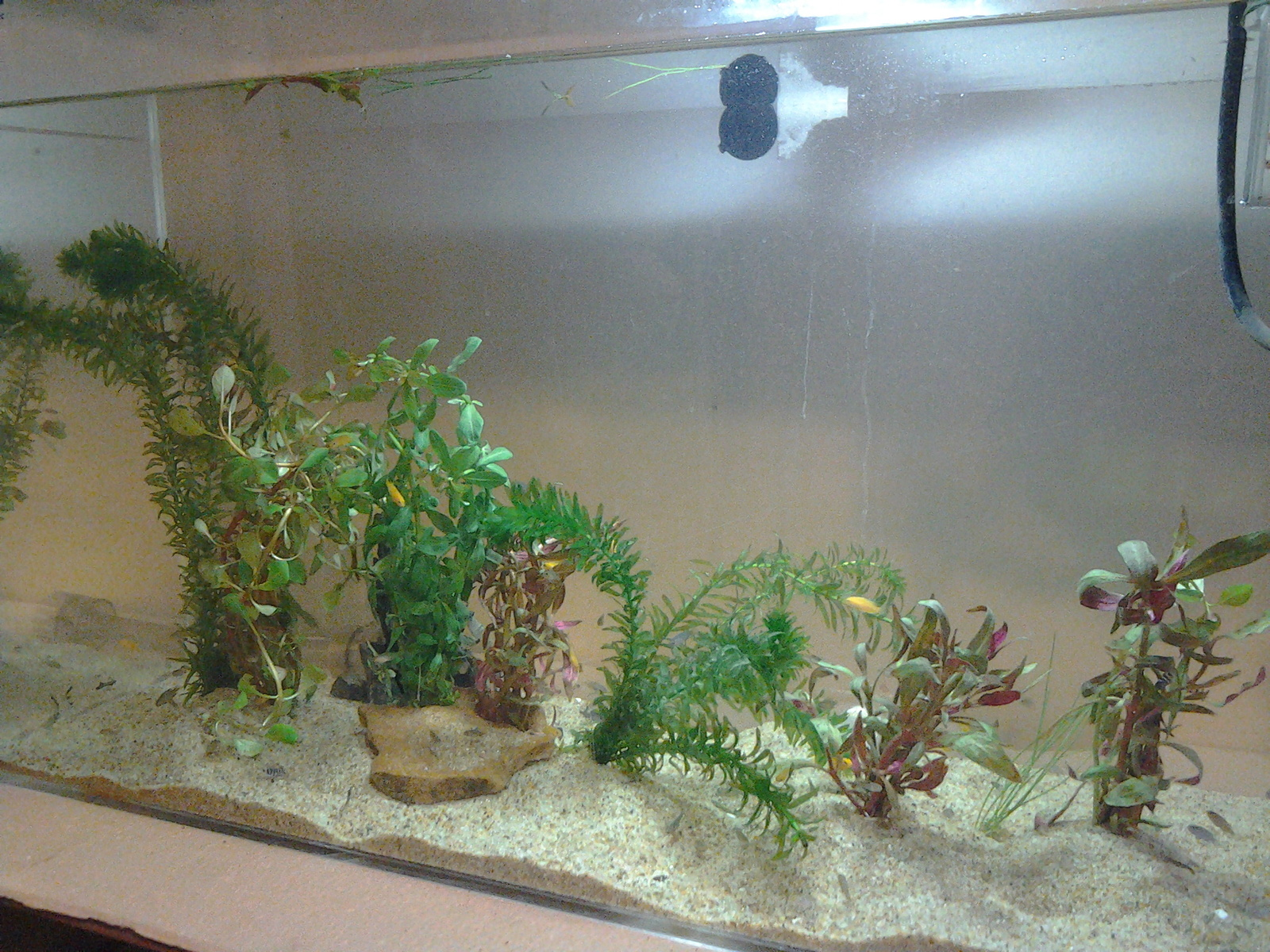 just added some live plants to the fry tank!!! | by manuel duran