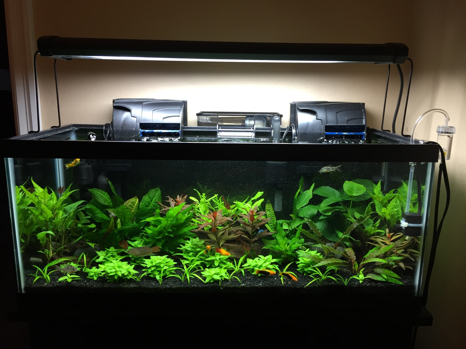 20G Long Planted | by Manu8__ Too