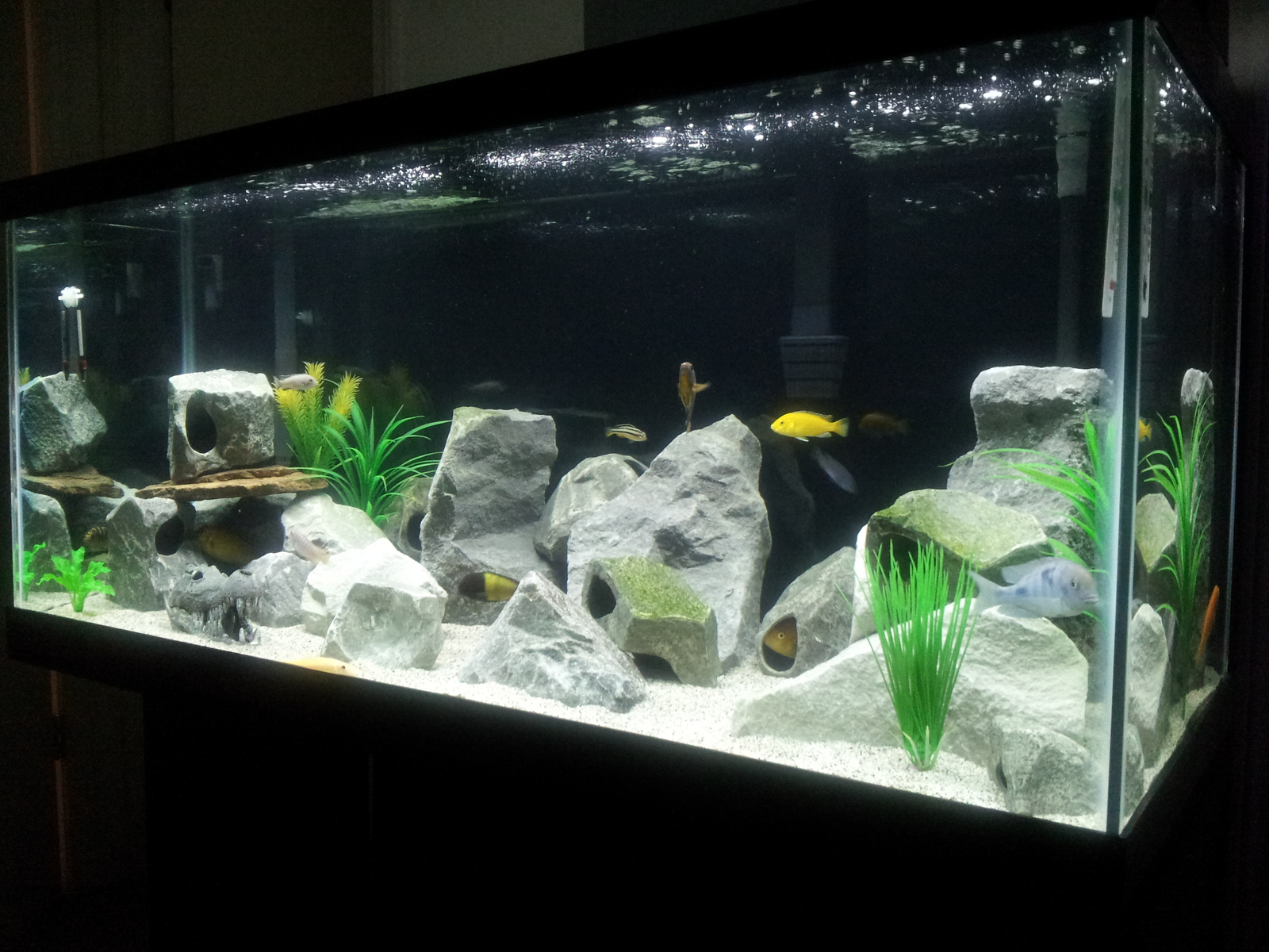 my new 75 glln tank, finally bro! Im still working on the rock scape. | by carlos duran
