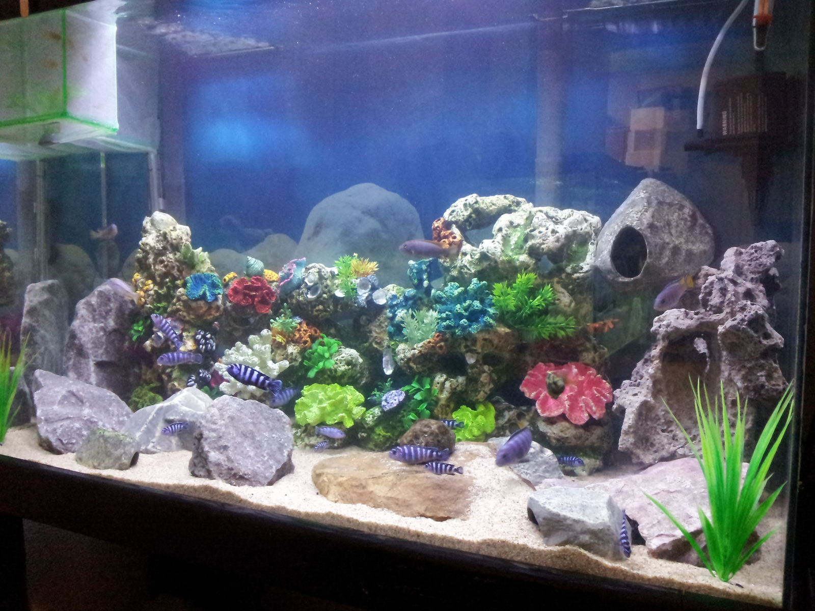 my demasoni tank & others. they like the change.. | by carlos duran