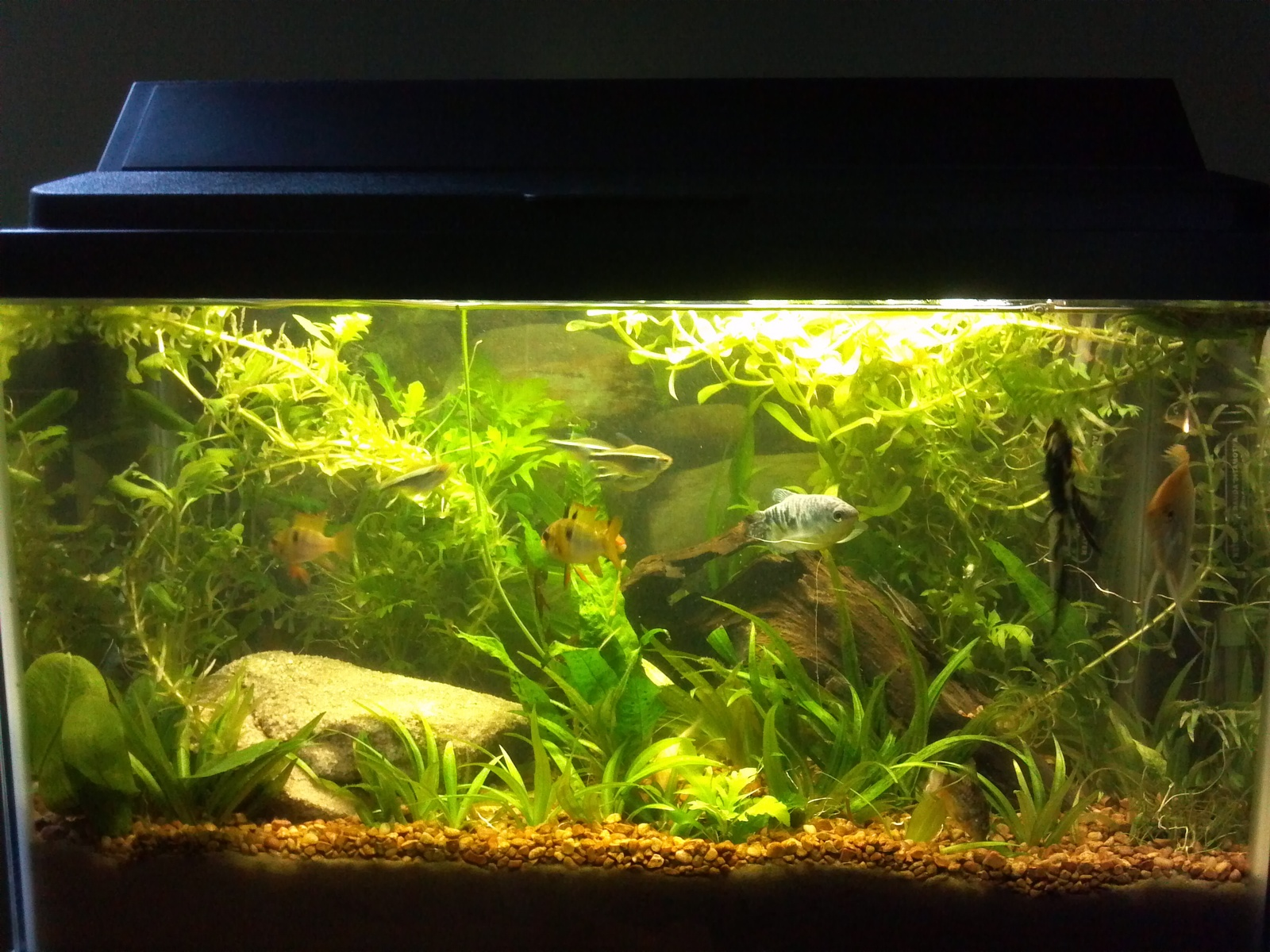 Redid planted tank | by Nathan Benningfield