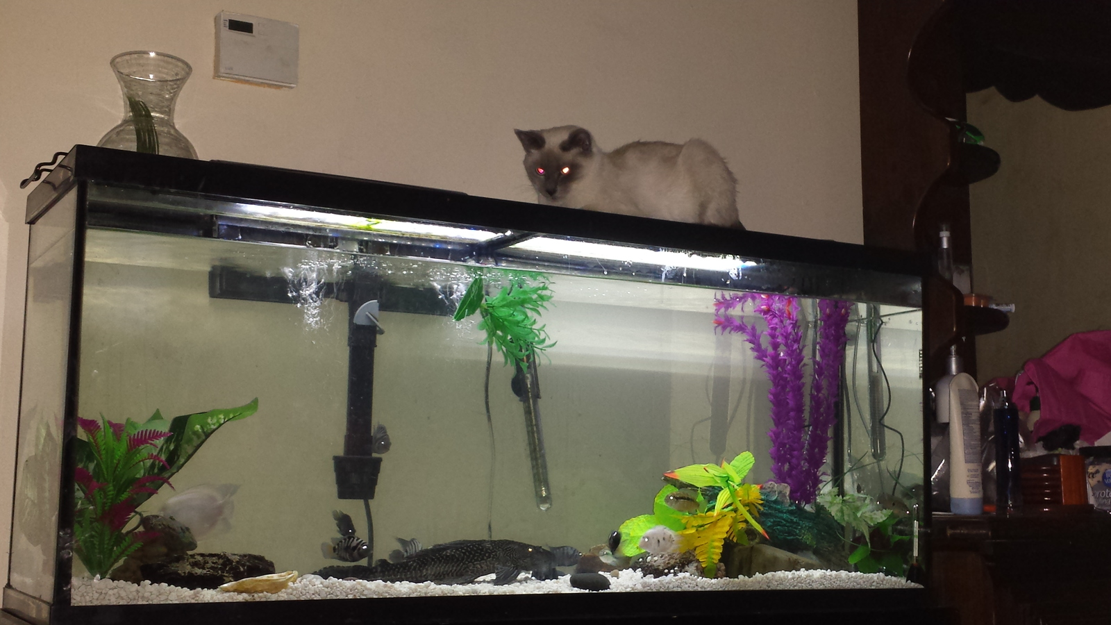 My kitty watching the fish swim | by Monica ackley