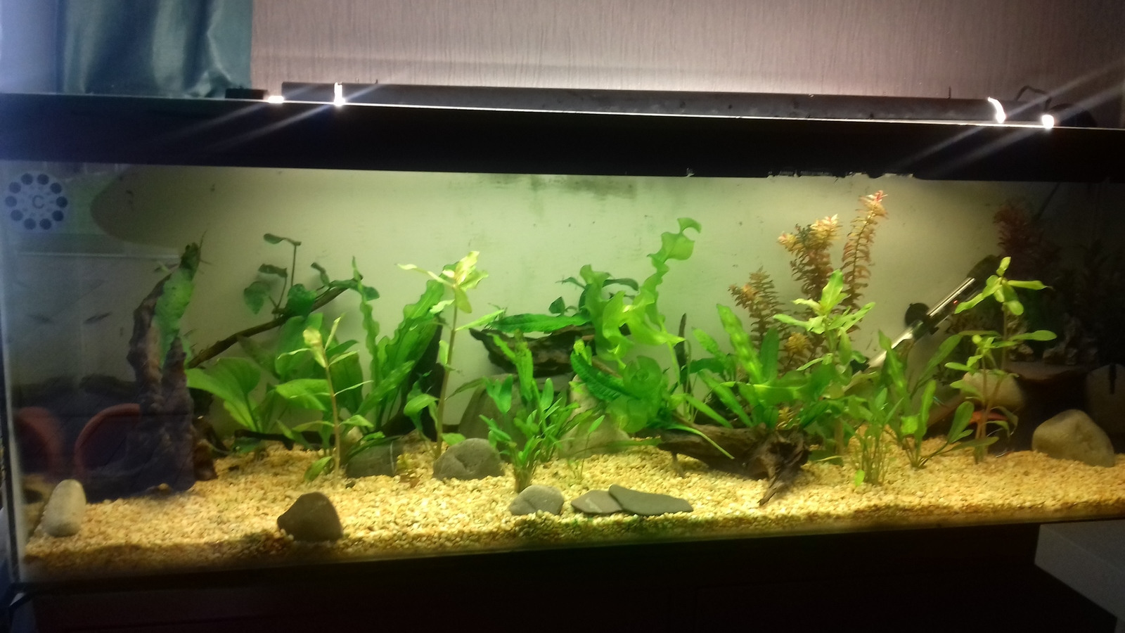 Tank update | by Stephen Chapman