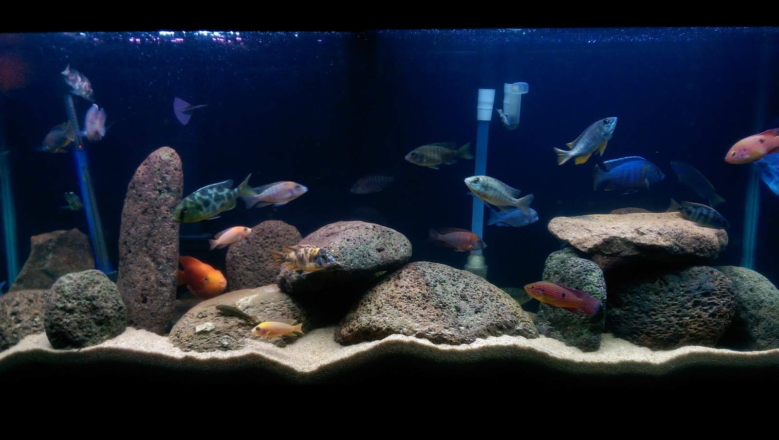 55gallon mixed tank  | by Rivera Rico