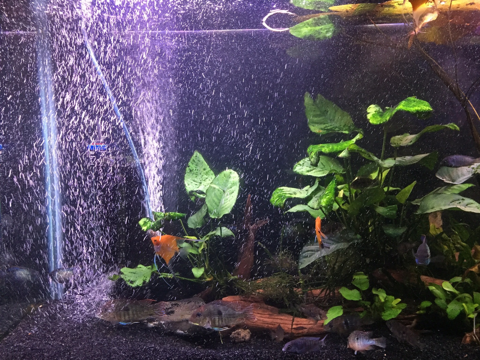 Aerating my tank | by Curtis Kurokawa