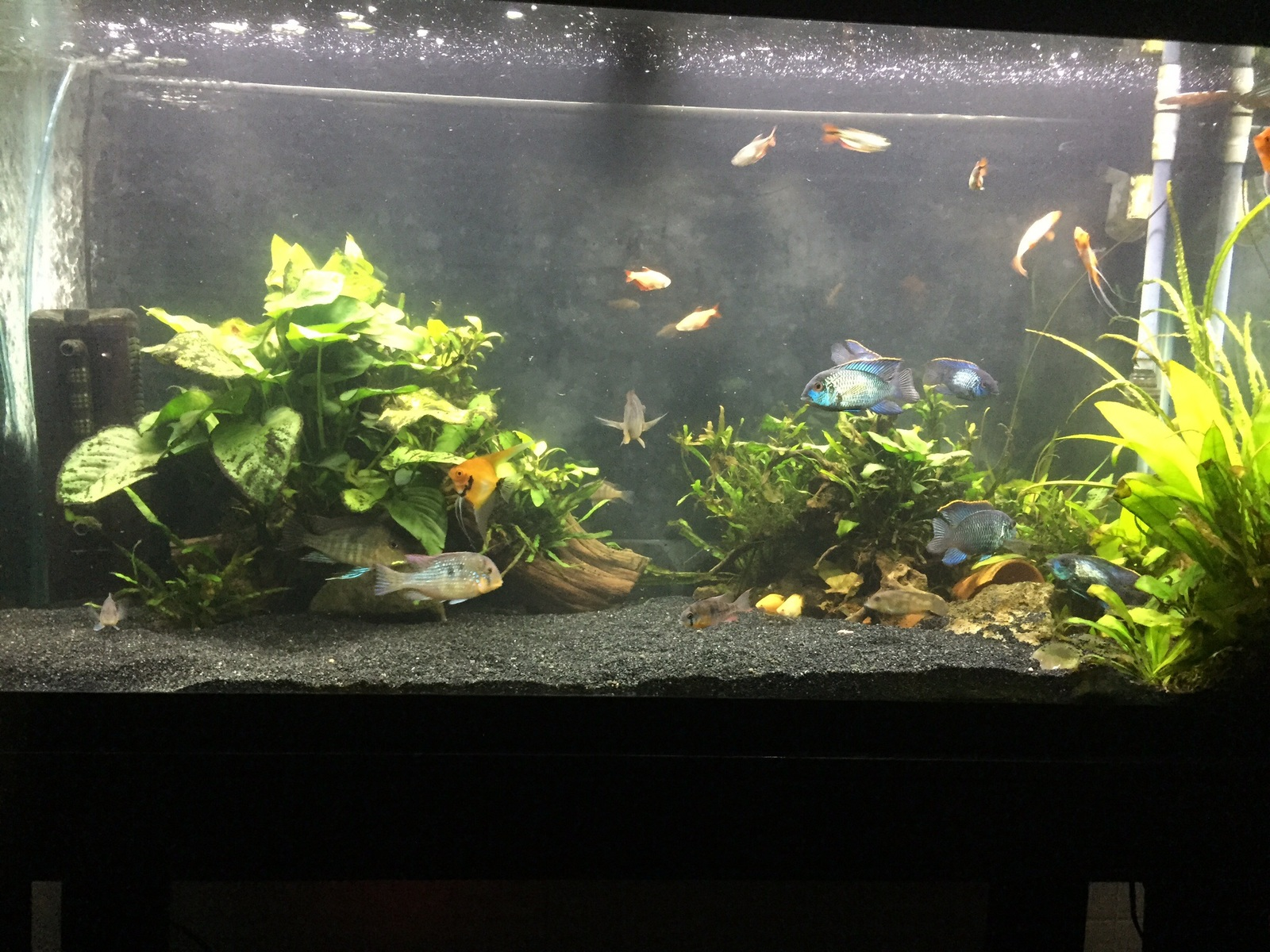 Tank Rearrangment | by Curtis Kurokawa