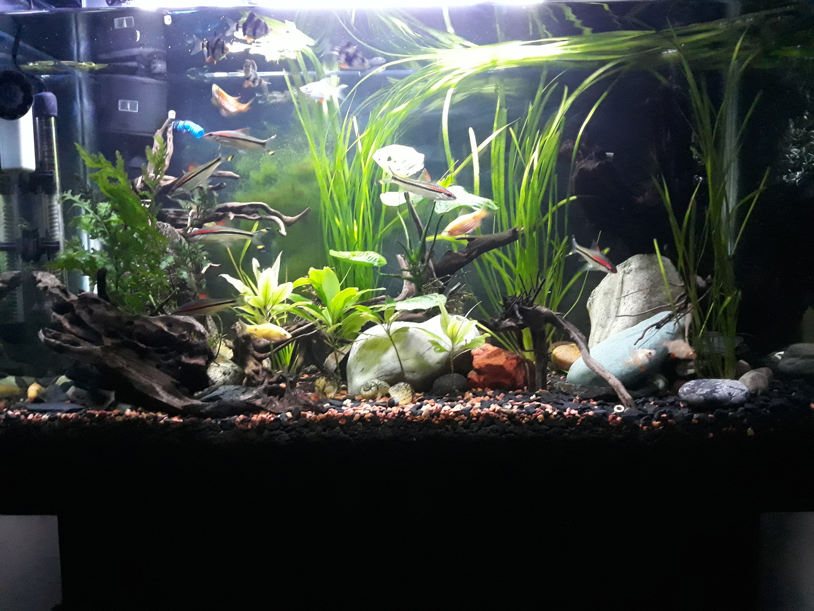 My plant tank | by hamid bird