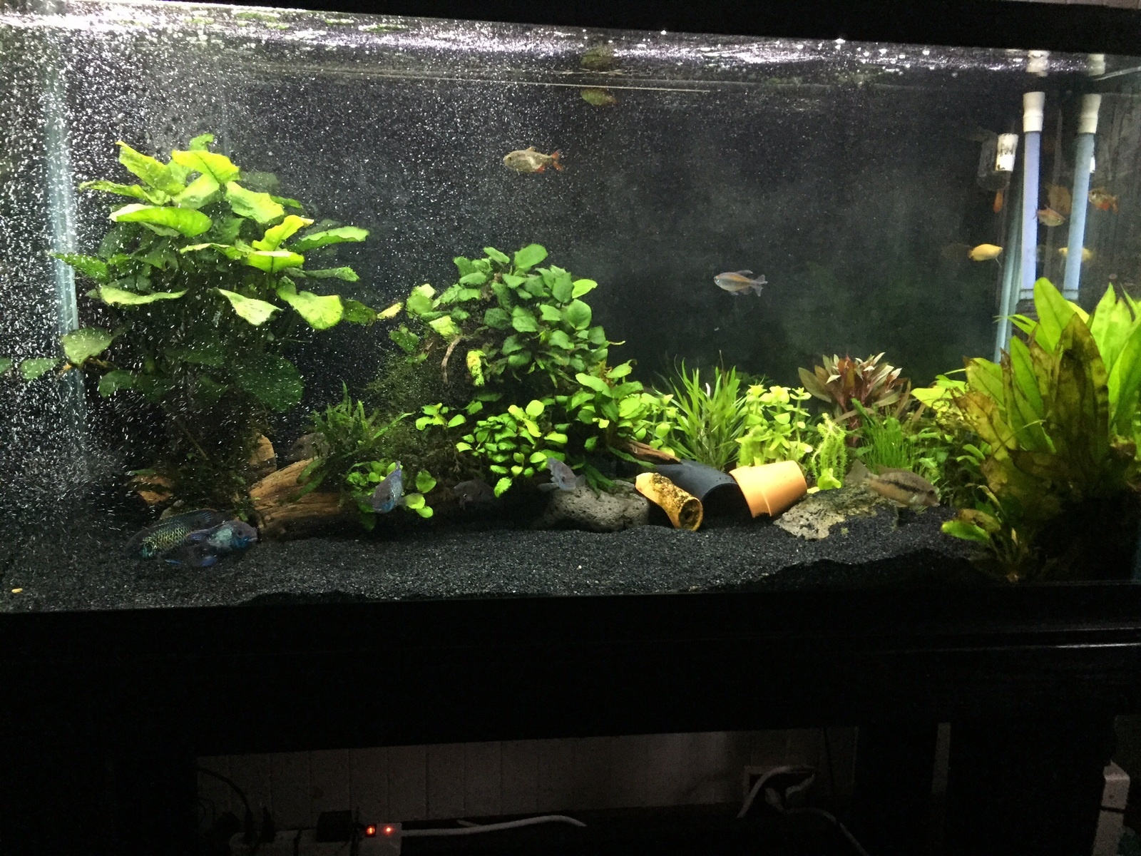 Added more plants  | by Curtis Kurokawa