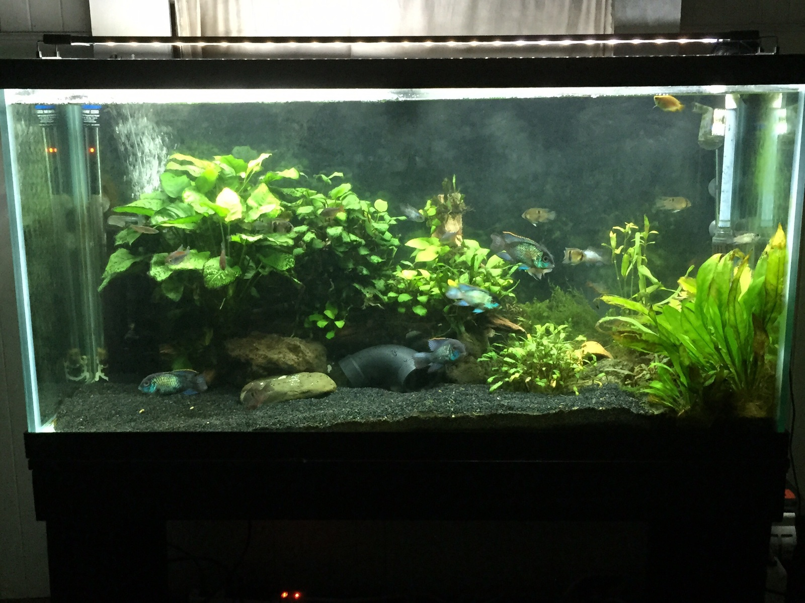 Just another picture of my planted tank | by Curtis Kurokawa