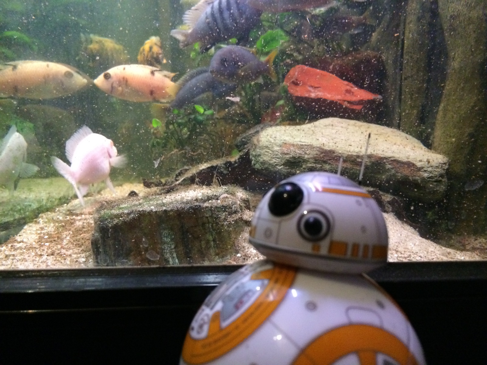 These are the fish you are looking for.. | by Ty Brayson