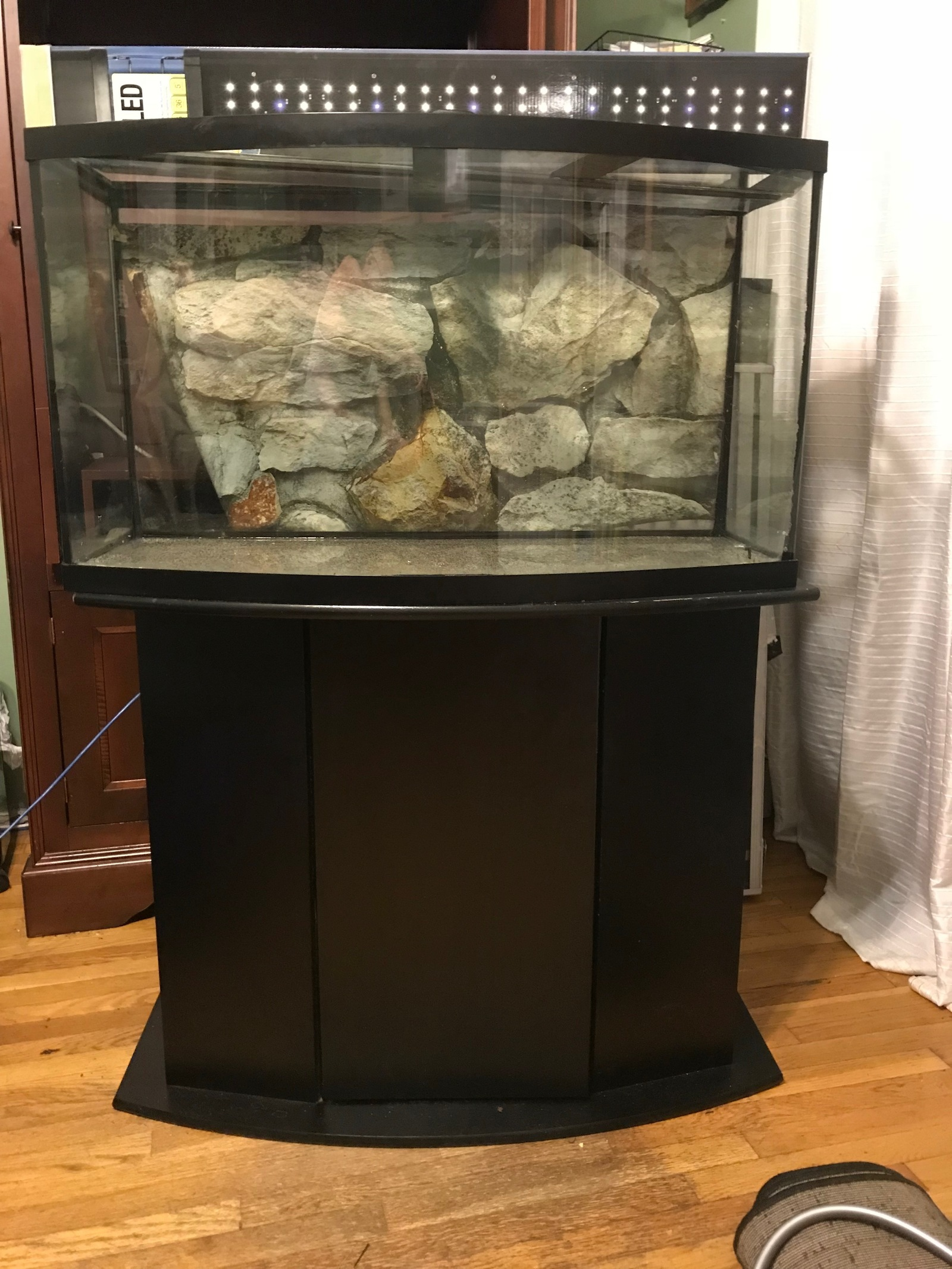 Evolution of this 46 gallon bowfront aquarium | by chris luciano