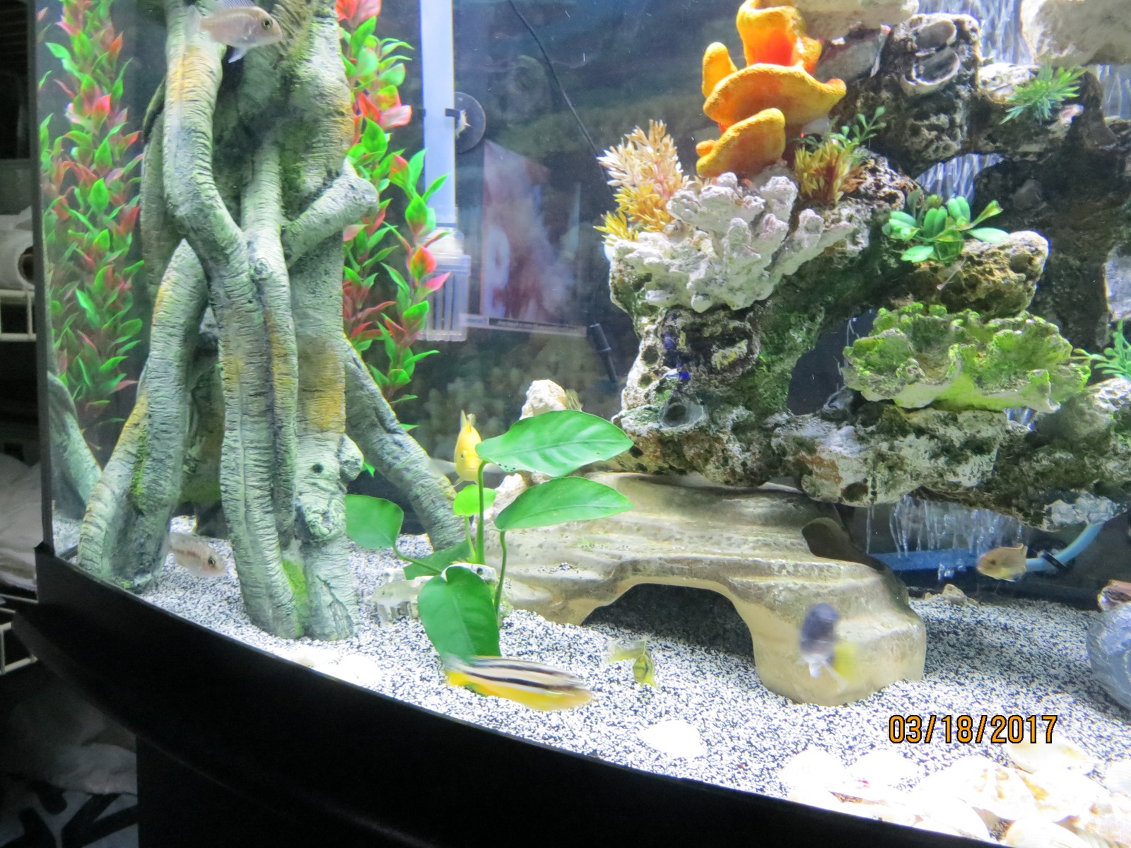 Add Rocks To Cichlid Tank  | by chris luciano