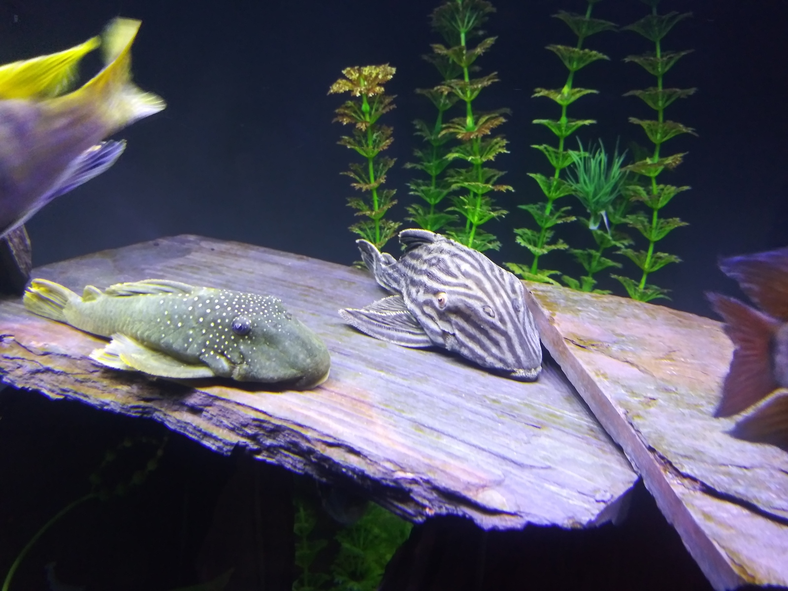 Plecos maybe | by david washington