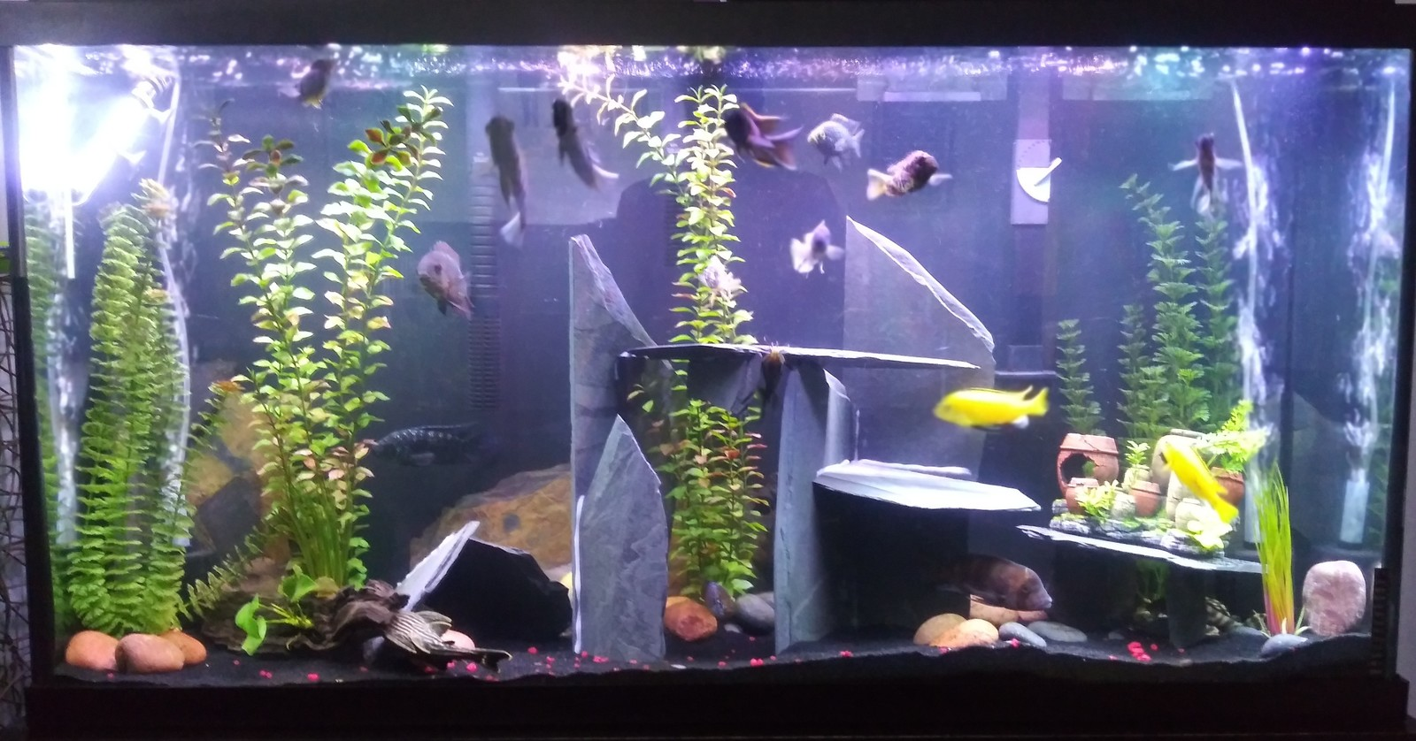 60 gallon revamp | by david washington
