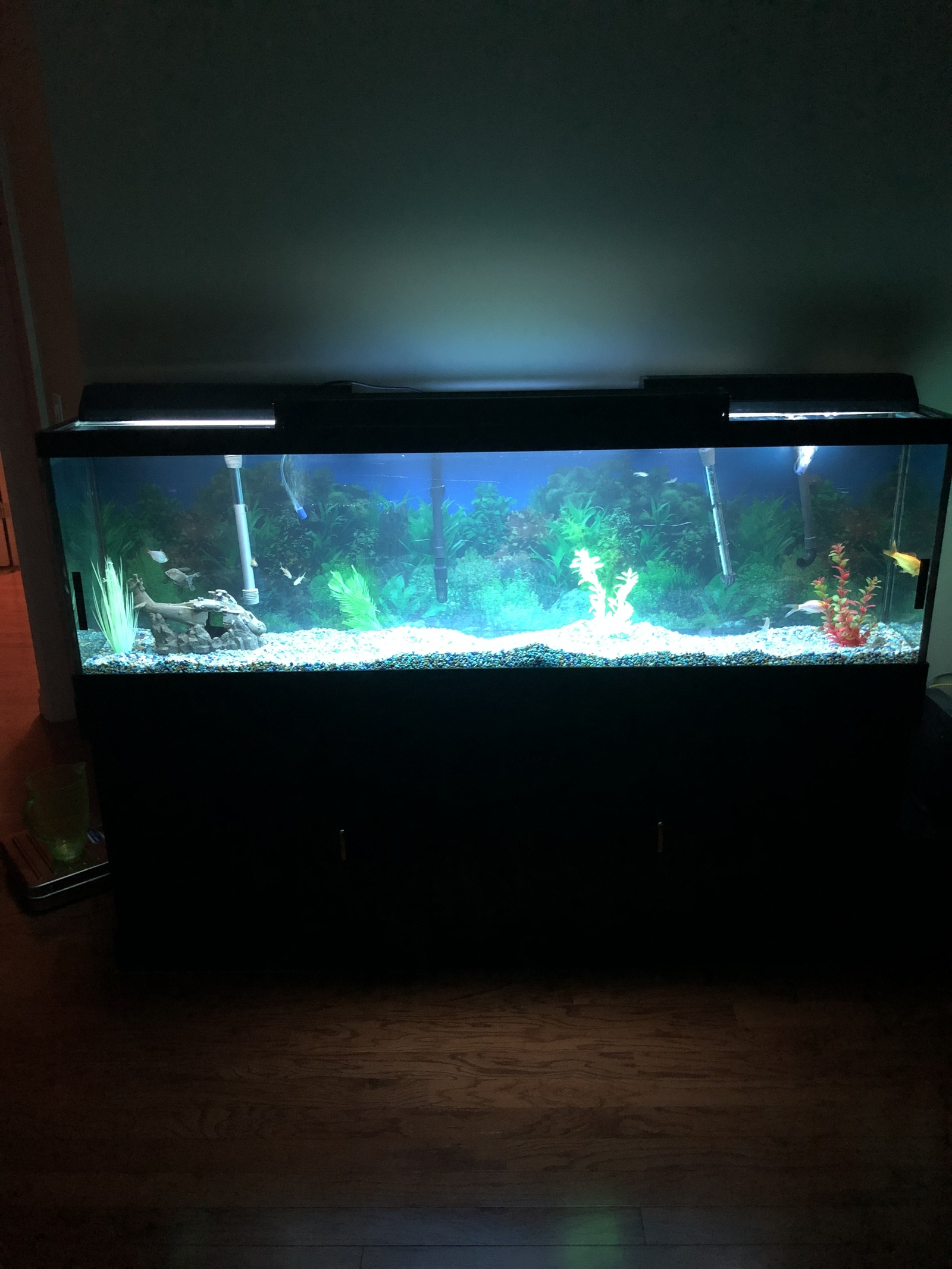 New 90gallon cichlids tank