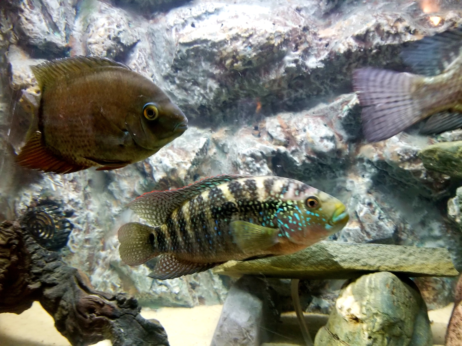 green severum and jack dempsey | by Dan Burkett