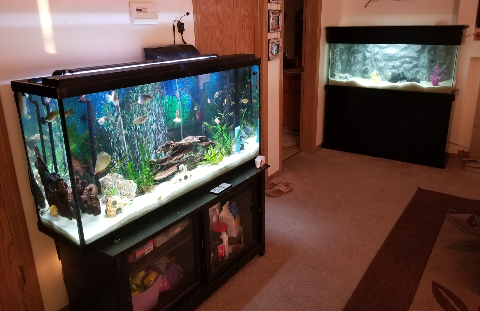 New fish room or as my wife calls it the living room   | by Dan Burkett