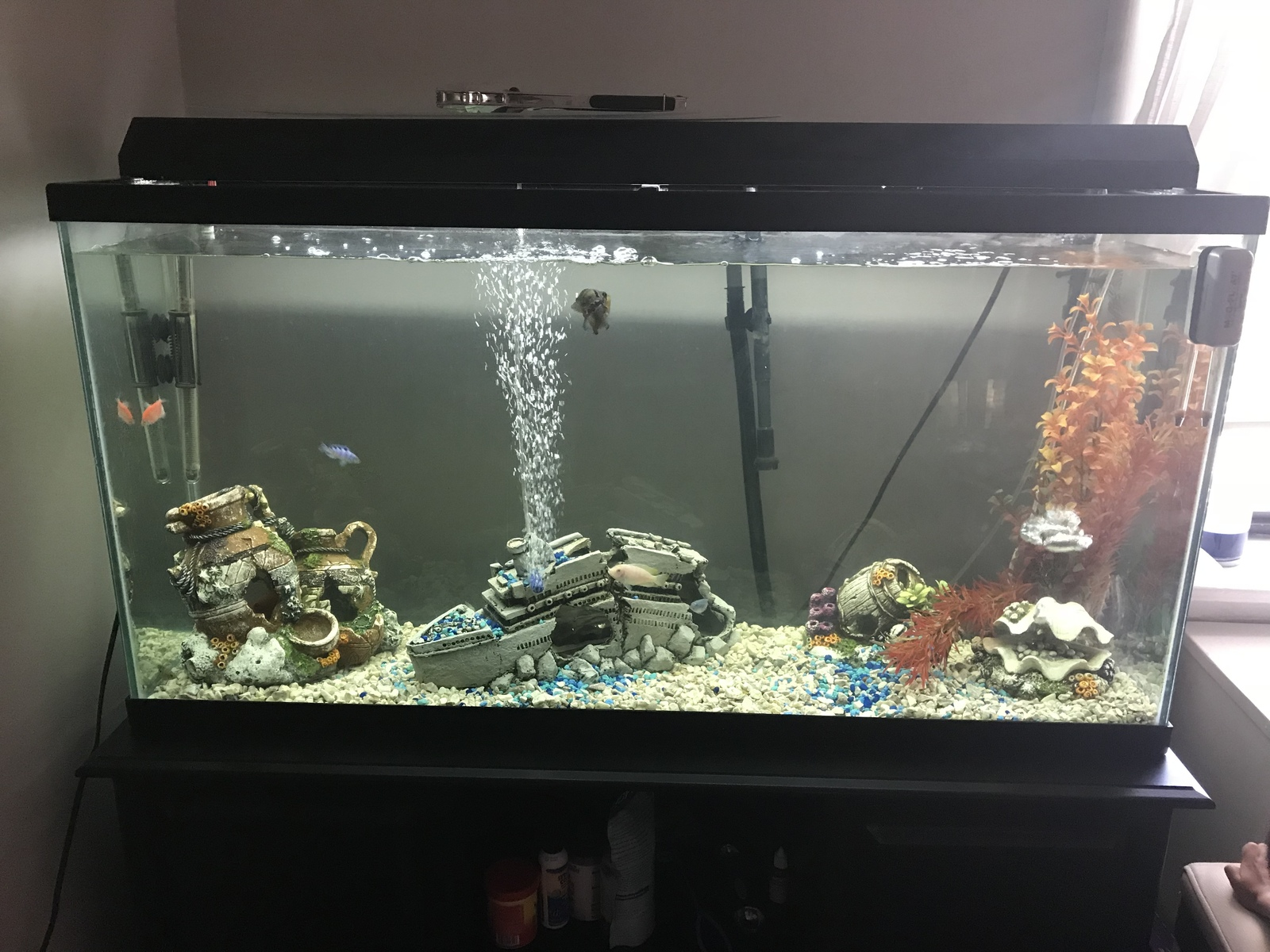 My new aquarium | by H Samuel YILDIRIM