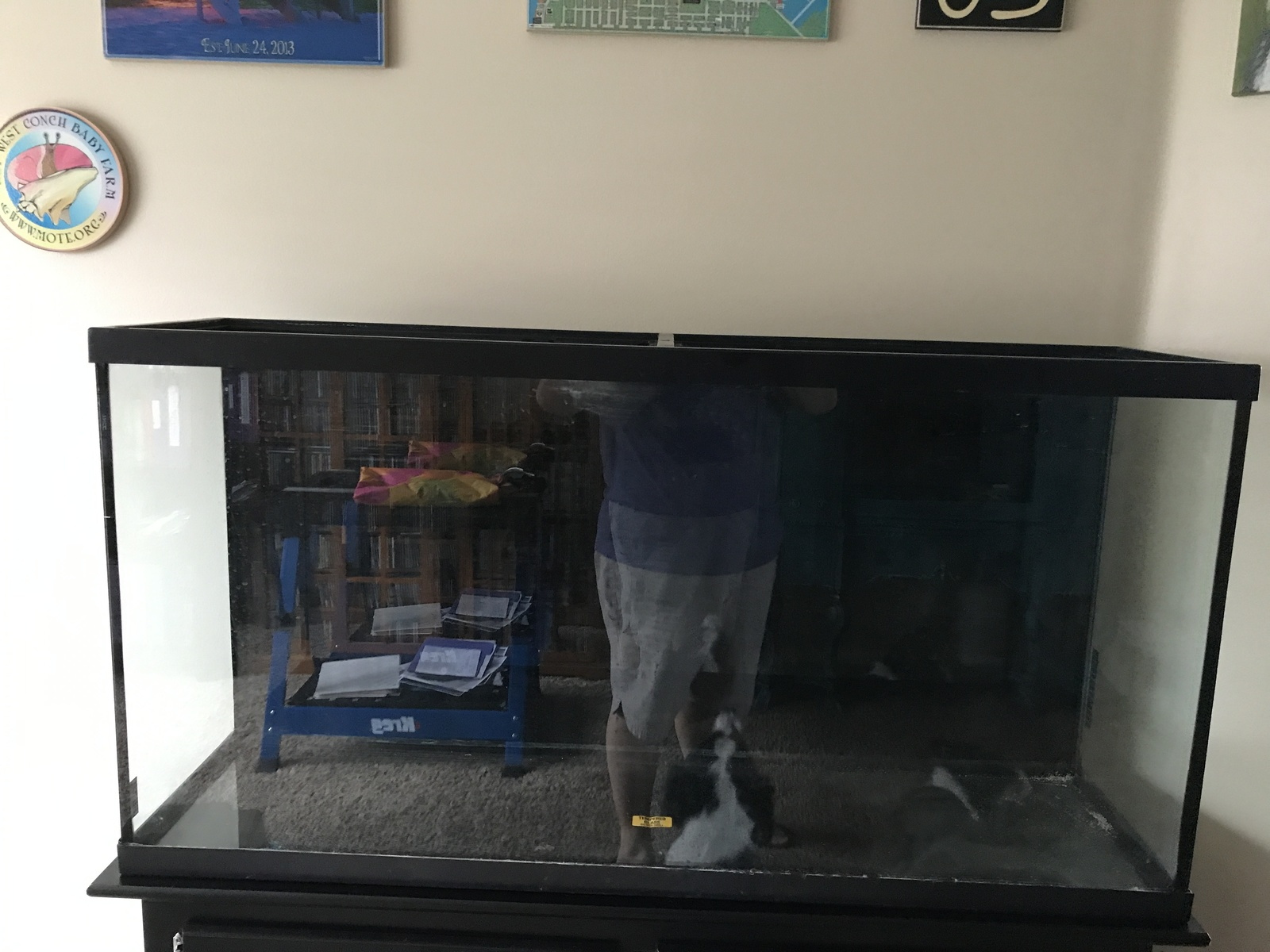 Beginnings of my 60g Lake Malawi Mbuna Tank