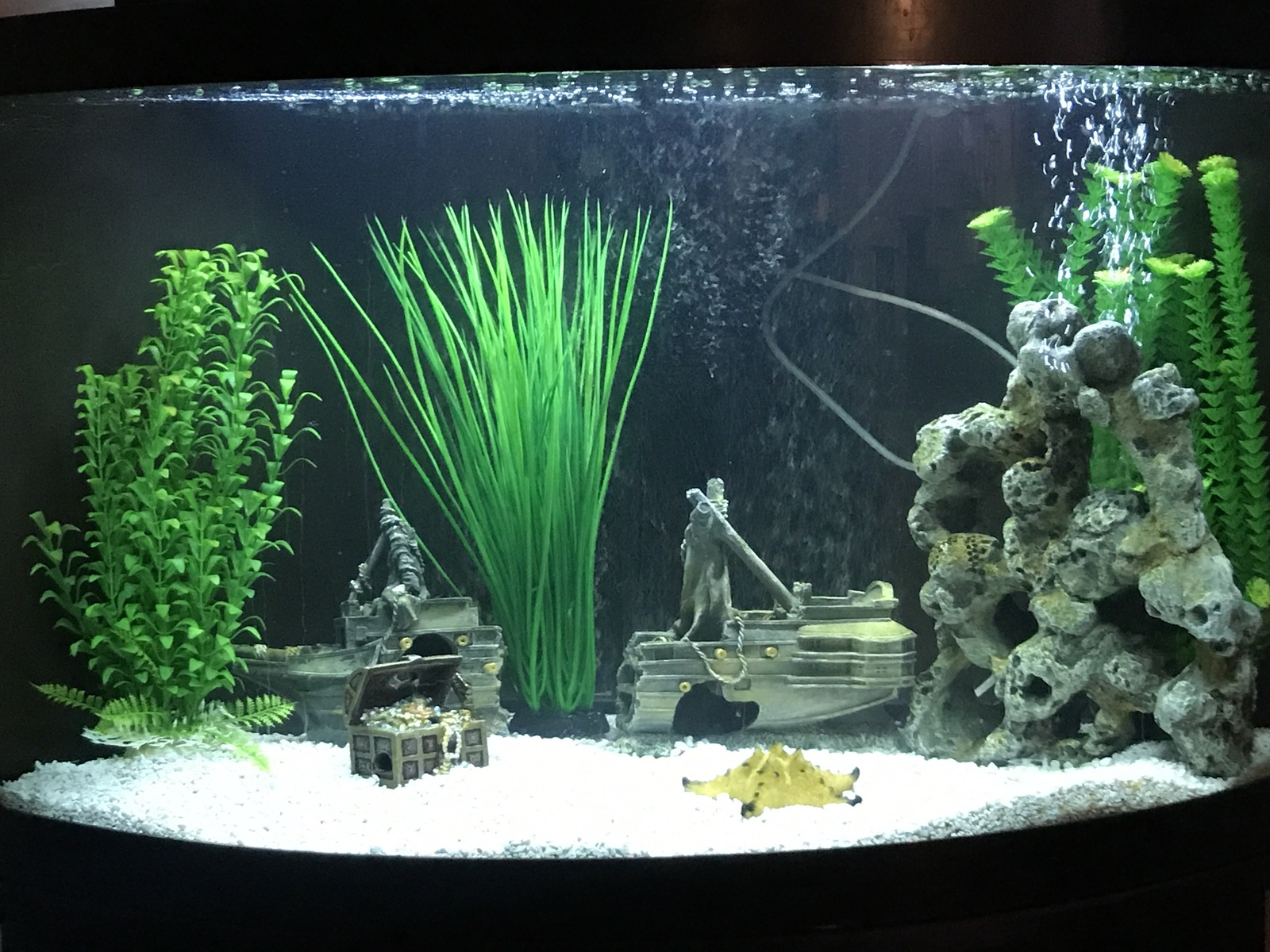 Beginner Cichlid Tank | by Paul Starr