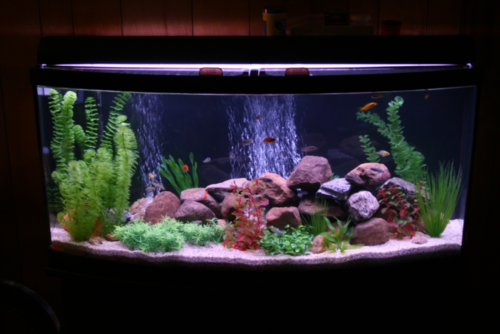 72 Gallon Bow Front | by Glenn McCreedy