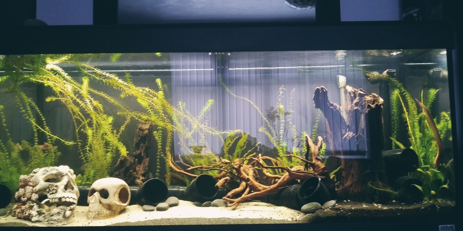 Our 4ft fluval | by cfkaz