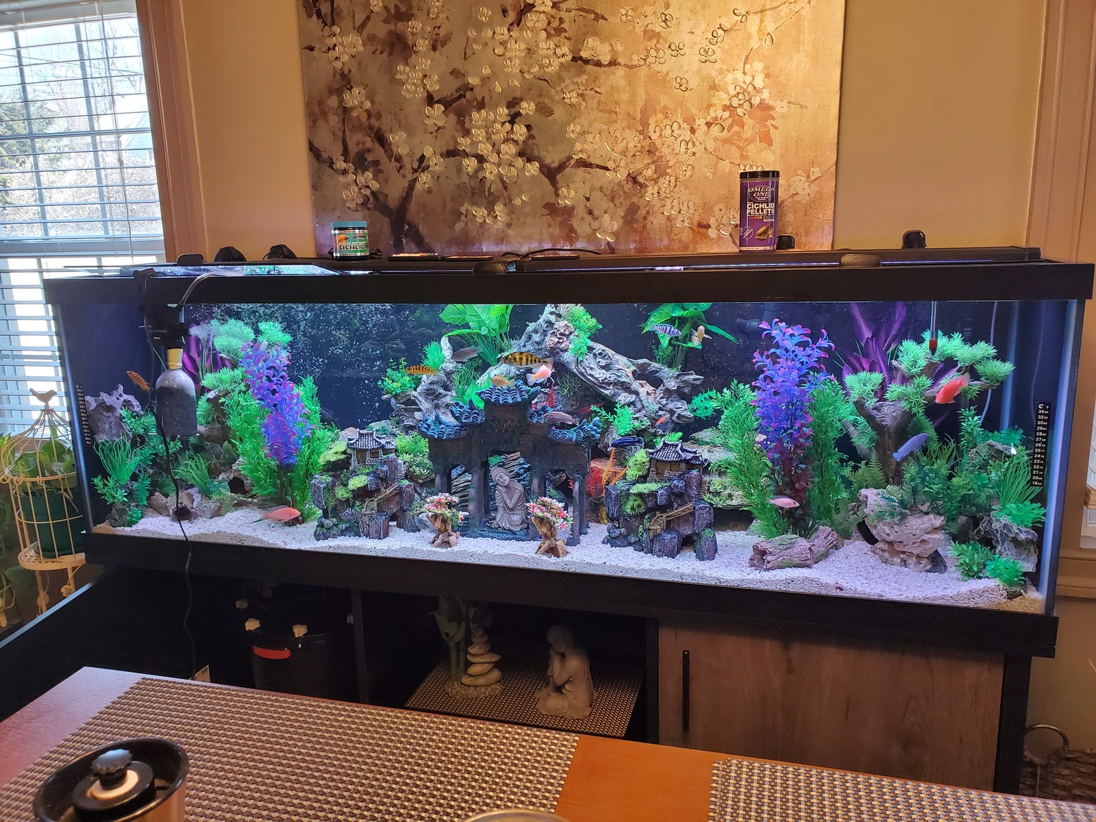 125gal African cichlid tank | by Moses Zayas