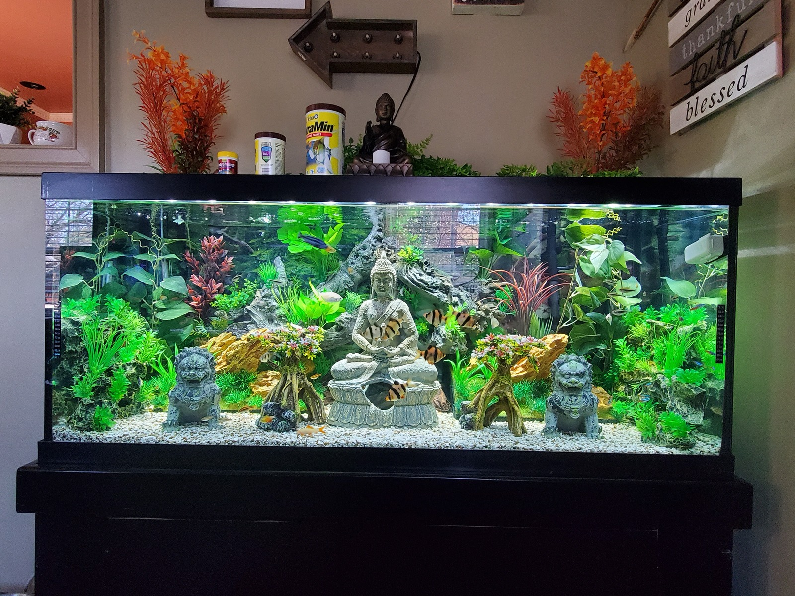 75 gallon  | by Moses Zayas