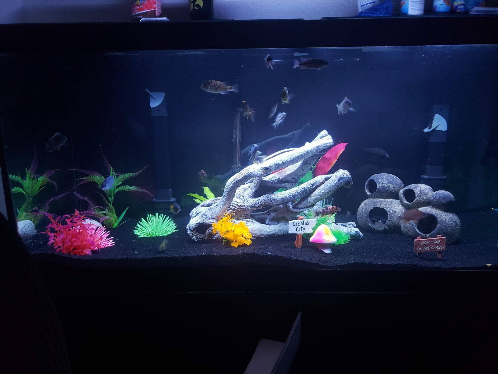 African Cichlid 75 Gallon Aquarium | by Zach Farrenkopf