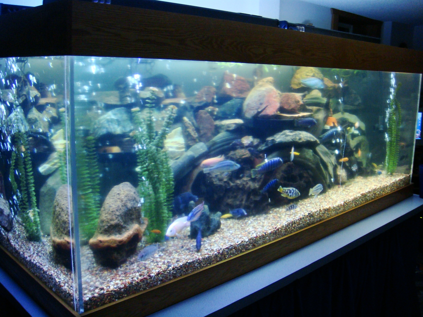 My 425 gallon tank | by longbow1