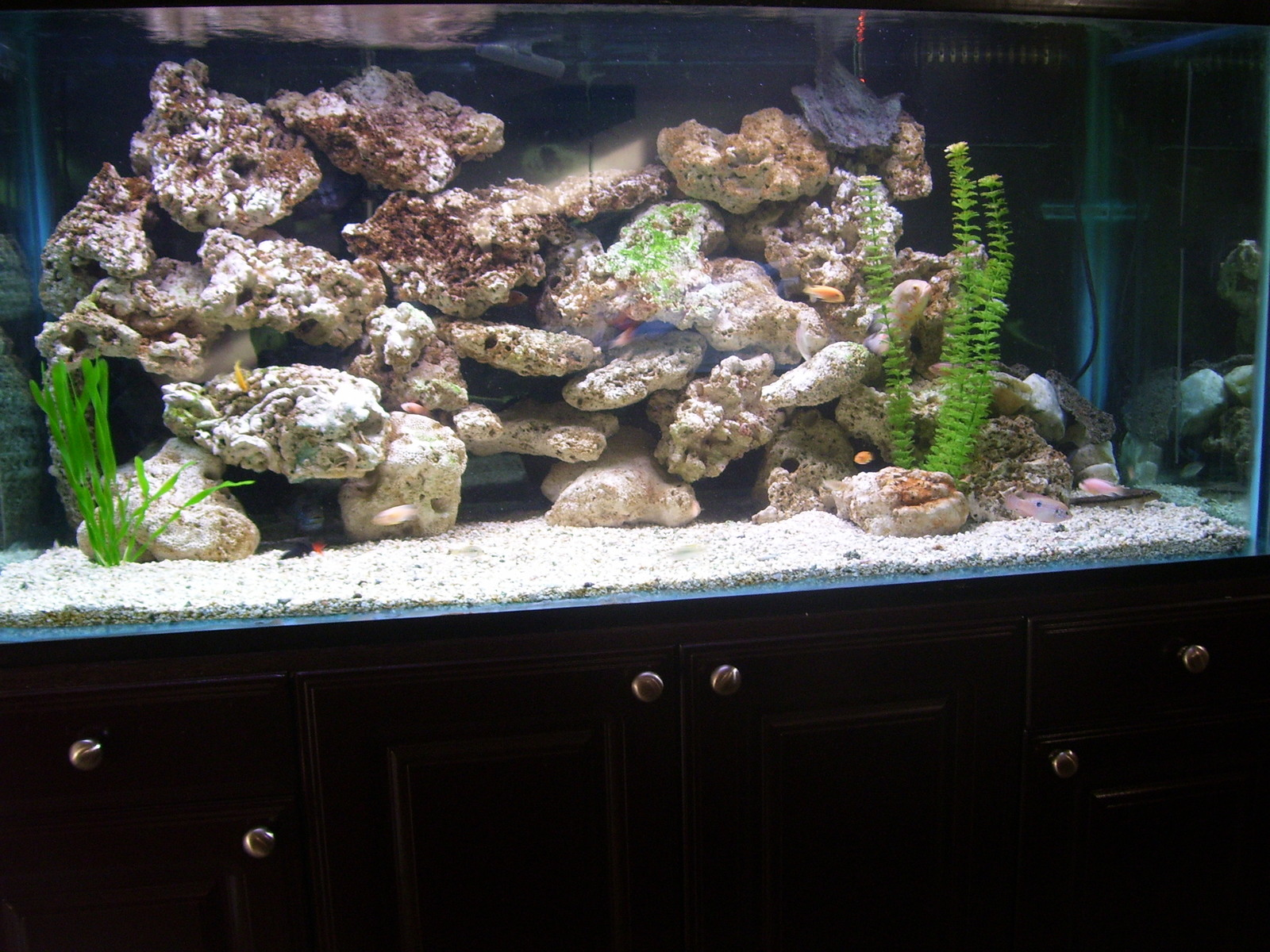 170 Gallon Mixed Cichlids | by Marcus Cole