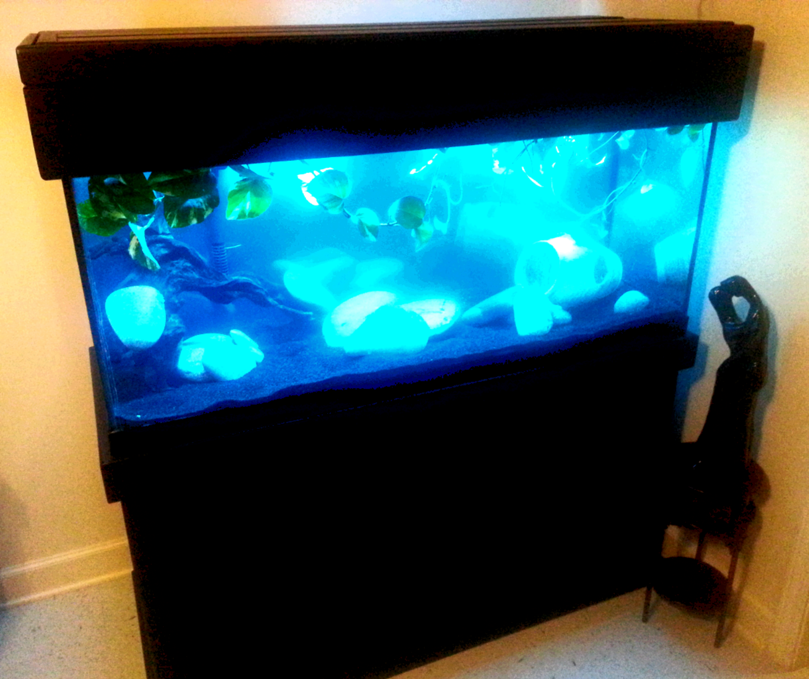 newest tank (75 gallon) | by karrie edwards