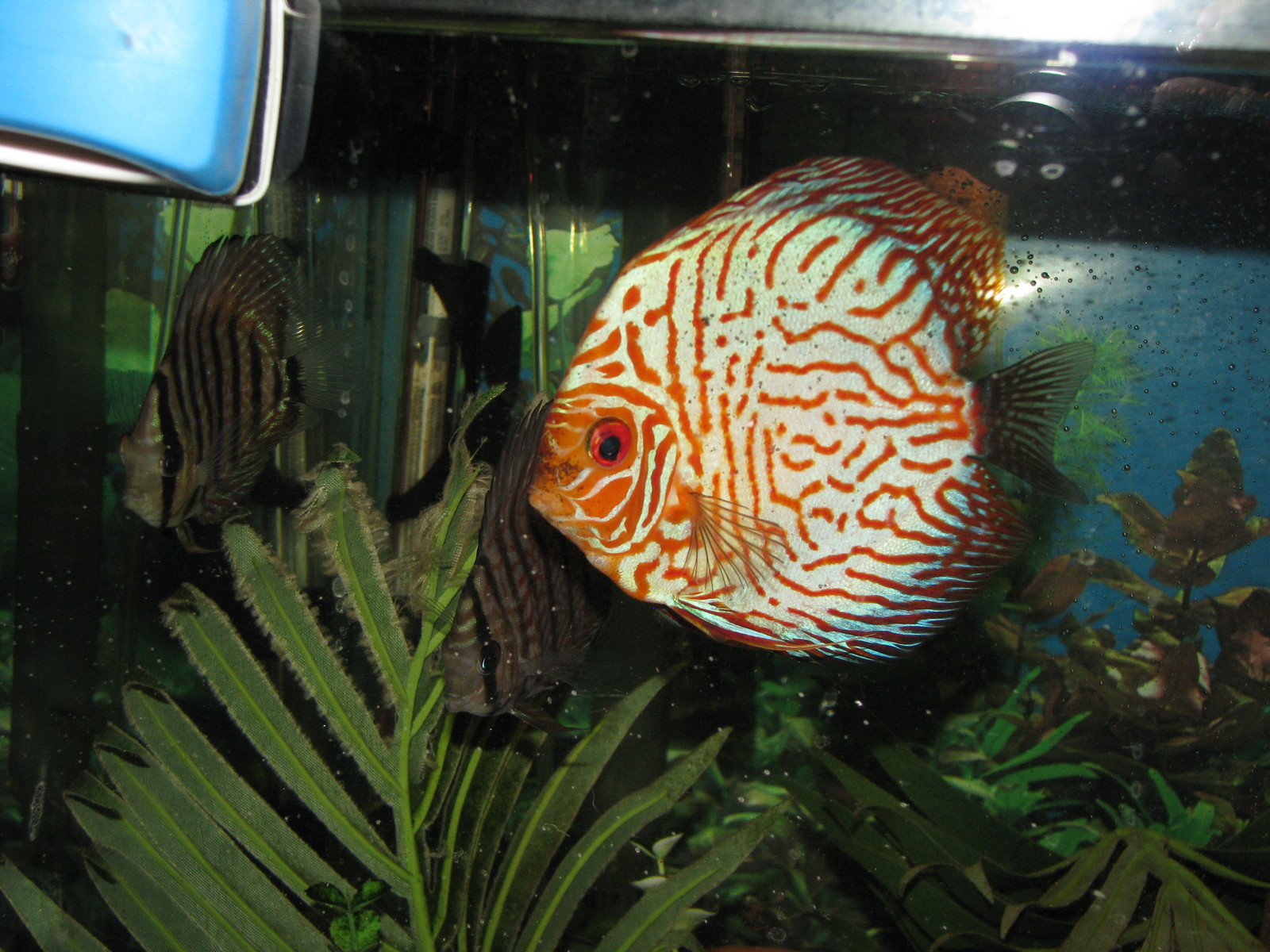 discus | by kyle jackson
