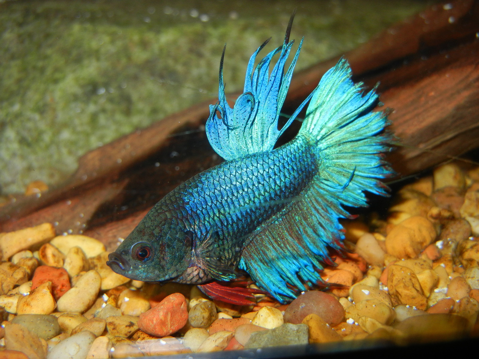 Betta | by John Young
