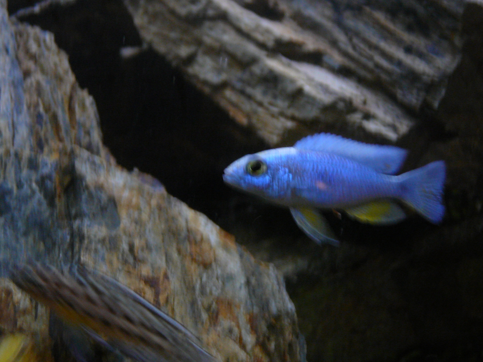 For Mr Cichlids | by ryan peterson