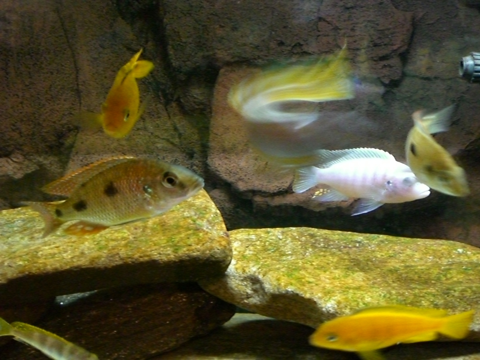 Can you guess the blurry fish in the middle? | by Donna M