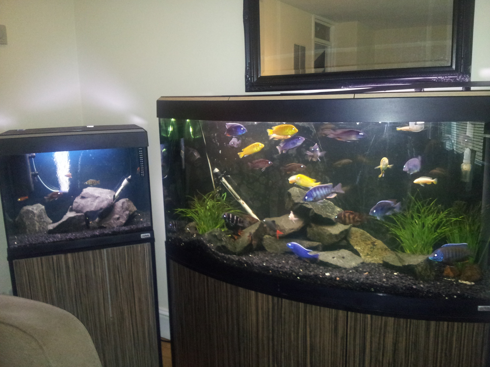 my tanks,  one on left is grow outtank now | by fourdell kidson