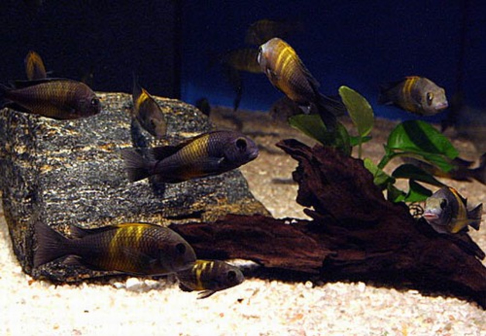 Tropheus tank, i converted it to N.W. Later